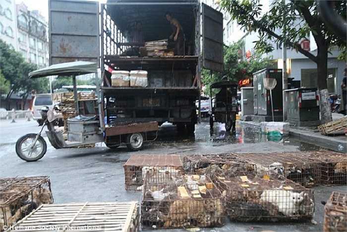 Nhiều con chó, mèo  bị bắt trộm từ các gia đình và được đưa đến các lò mổ gần thành phố trước lễ hội