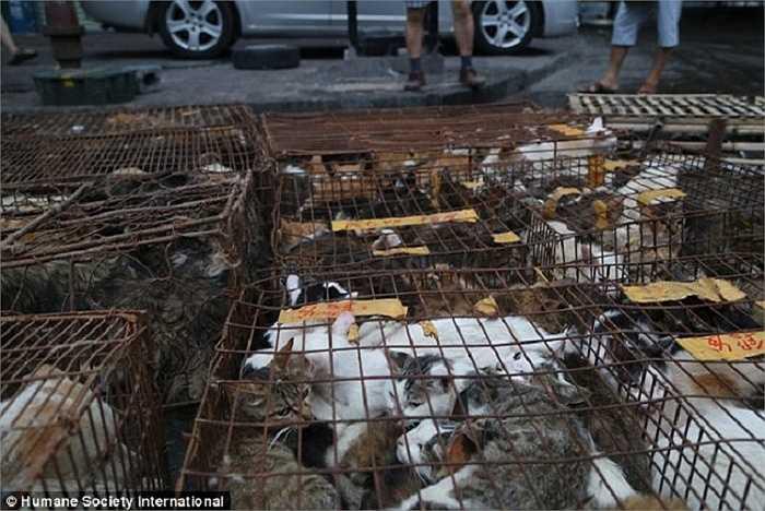 Nhà hàng như No. 1 Crispy Dog Meat ở Ngọc Lâm có thể phục vụ 200 tới 300 khách hàng một lúc