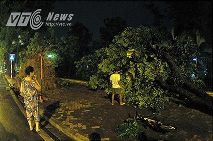 Bác Phạm Thị Hoài (57 tuổi, Lê Duẩn, Hà Nội) cho biết: 'Chưa bao giờ tôi chứng kiến một trận mưa giông lớn tới như vậy, ngồi trong nhà mà cánh cửa gỗ cứ rung lên bần bật, cả tuyến phố Lê Duẩn có tới hơn 10 cây cổ thụ bị bật gốc hết rồi.'