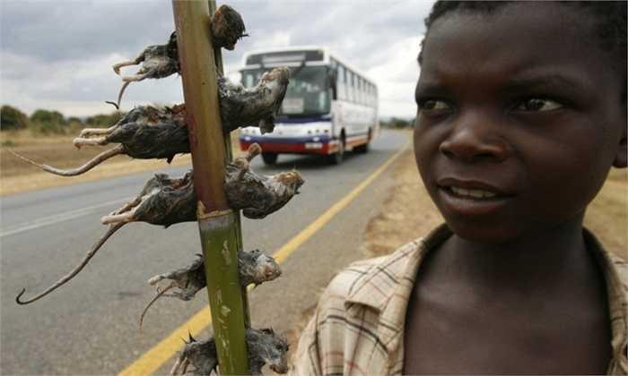 Một cậu bé bán thịt chuột tại Malawi