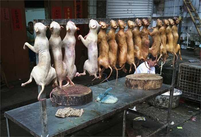 Thịt chó và thịt mèo là điều cấm kỵ ở châu Âu nhưng lại là món ăn vô cùng phổ biến ở châu Á