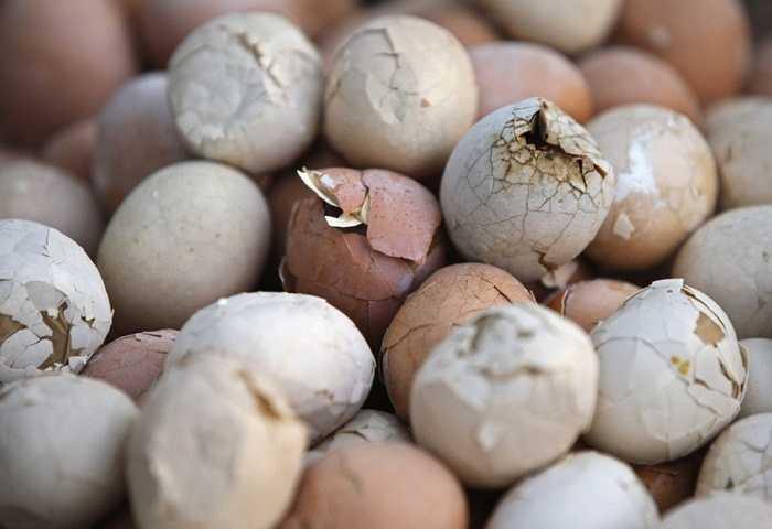 Một số tỉnh tại Trung Quốc vẫn rất ưa chuộng món trứng luộc từ nước tiểu của trẻ em