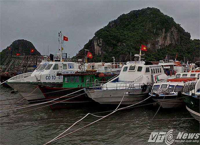 Tại bến cầu tàu Cảng Cái Rồng, các phương tiện tàu thuyền đã được neo đậu chắc chắn để tránh trú bão số 1