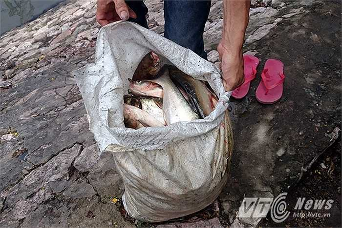 Một bao tải đầy cá mà anh Long bắt được trong nửa buổi sáng.