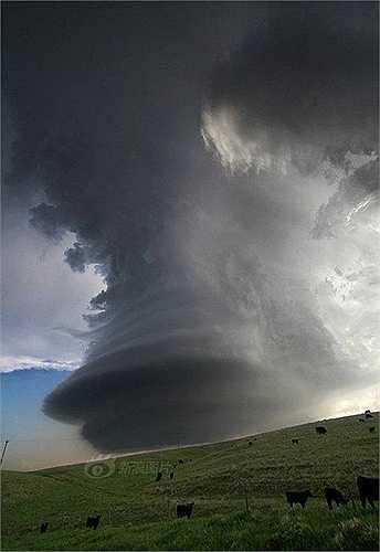 Hình ảnh cơn lốc xoáy xuất hiện ở  Great Plains. Khoảng tháng 5 hoặc tháng 6, ở đây thường xuất hiện lốc xoáy. Mỗi lần như vậy Blake lái xe đưa du khách chạy theo chúng
