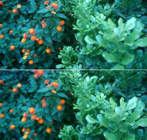 Thử thay đổi điểm lấy nét sau khi chụp trên Bphone. Chỉ có thể thay đổi điểm lấy nét với các ảnh được chụp khi bật chế độ này.