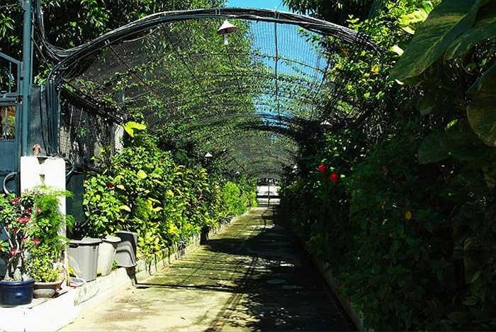 Khu resort cao cấp của Diễm My được bao phủ bởi cây xanh.