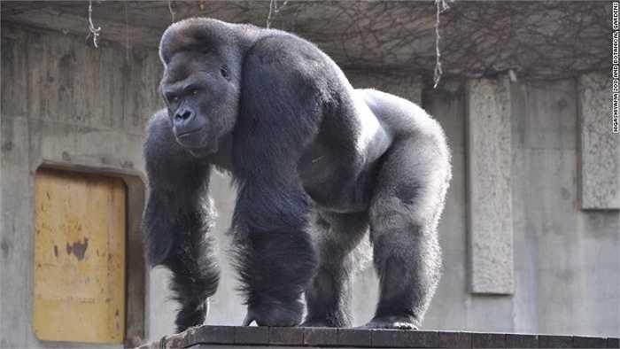 Quản lý vườn thú cho biết rất nhiều chị em phụ nữ đổ xô đến để tận mắt nhìn thấy chú khỉ 'nam tính'