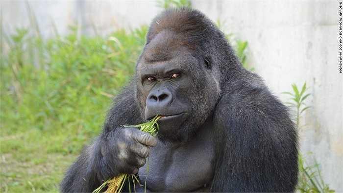 Những người sử dụng mạng Twitter liên tục đăng tải những bức ảnh về chú khỉ nổi tiếng ở  vườn thú Higashiyama