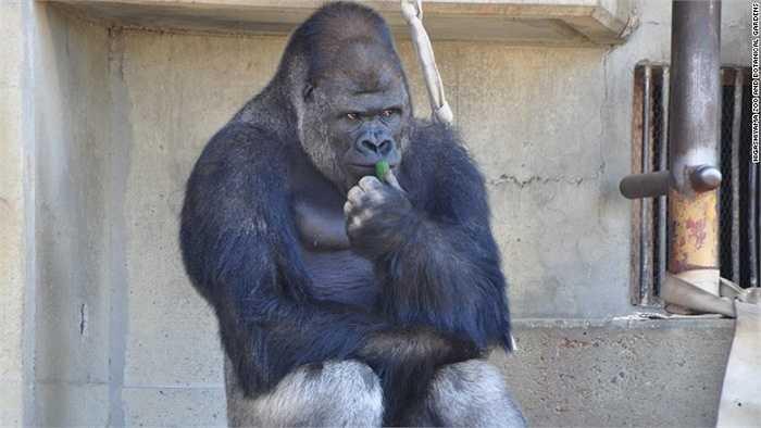 Chị em phụ nữ 'hâm mộ' chú khỉ vì vẻ 'đẹp trai, suy tư, nam tính'