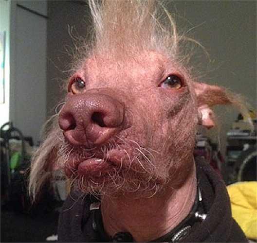 Chú chó Morris có mũi giống mũi lợn