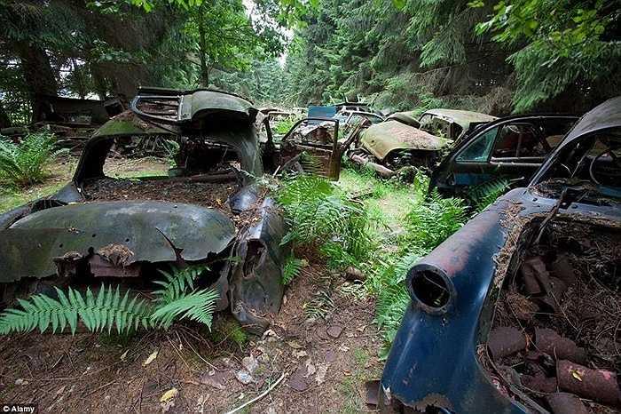 Ngôi làng phía Tây khu vực Ardennes (Bỉ) có hàng chục chiếc xe ô tô đắp chiếu, hoen gỉ từ thời Thế chiến thứ Hai