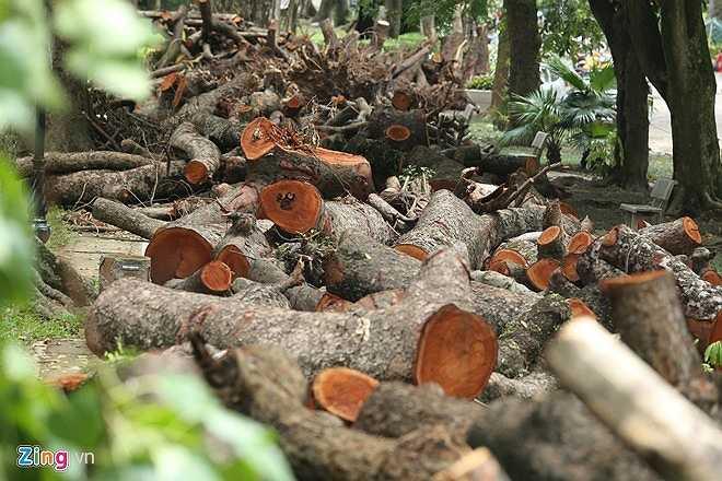 Toàn thành phố có gần 1.300 cây bị đổ, trong đó hơn 800 cây thuộc địa bàn 12 quận, hơn 400 ở các huyện ngoại thành. Khu vực thiệt hại nặng nề nhất là quận Hai Bà Trưng với hơn 200 cây đổ, trong đó có 50 cây cổ thụ.