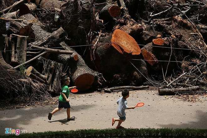 Các loại cây ở đây gồm xà cừ, phượng, muồng... Nhiều thân cây có đường kính lớn.