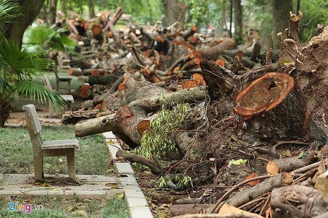 Sau 3 tuần xảy ra trận dông lịch sử, Hà Nội vẫn chưa giải quyết khối lượng gỗ khổng lồ này.
