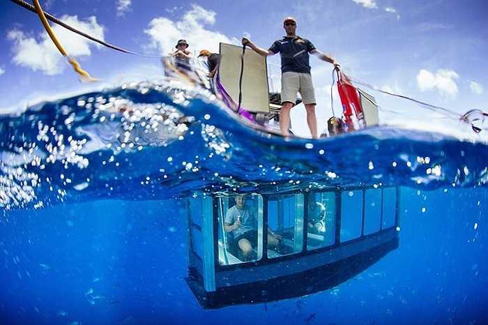 Ở Australia, có dịch vụ ngắm cá mập trong lồng kính thả xuống biển. Nếu bạn đủ can đảm có thể đối diện với cá mập và ghi lại những khoảnh khắc tuyệt vời