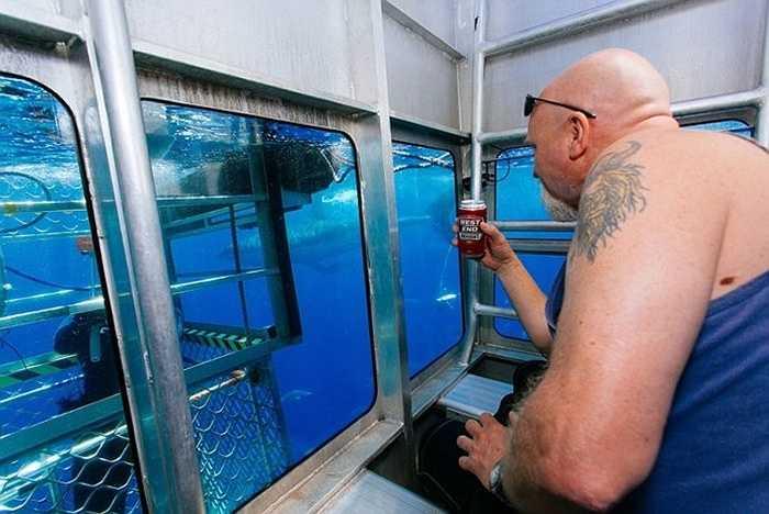 Diện tích chiếc lồng không lớn lắm nhưng đủ chỗ cho 6 người ngồi cùng ăn và ngắm cá mập cùng nhiều sinh vật đang bơi lội bên ngoài