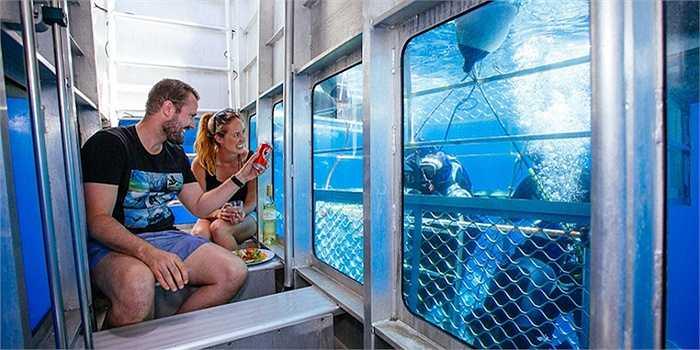 Dịch vụ ngắm cá mập này thu hút rất đông du khách nhưng có lẽ chỉ những ai không yếu tim mới dám trải nghiệm