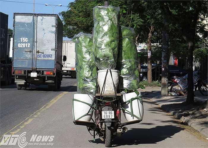 Trên đường phố nội thành Hải Phòng, xe chở cây cảnh cao ngút