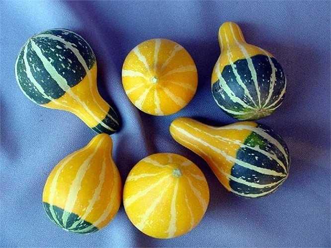 Đất trồng có độ PH 6,1-6,5 phù hợp để trồng dưa lọ.