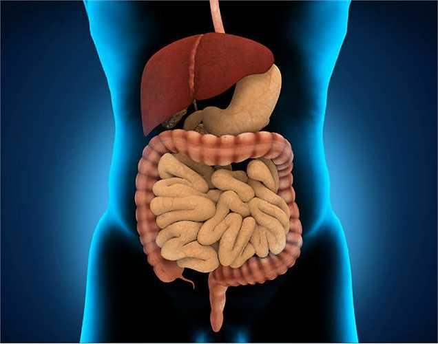 11. Tác dụng trên thận: Thận bị ảnh hưởng bởi oxalat & phytoestrogens có trong các sản phẩm đậu nành. Oxalat gây sỏi thận, trong khi hàm lượng phytoestrogen có thể gây suy thận.