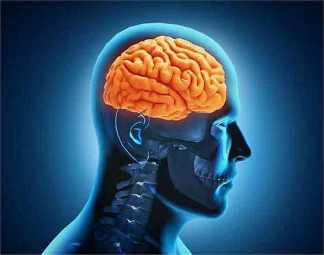 Lợi ích tới não: Chức năng hoạt động của bộ não phụ thuộc hoàn toàn vào các loại thực phẩm bạn ăn vào. Khi bạn thêm các thực phẩm giàu protein vào chế độ ăn, bộ não sẽ linh hoạt hơn.