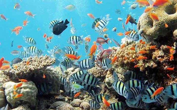 Đắm mình trong làn nước trong xanh của Đảo Ngọc, du khách thảo thích khám phá đáy đại dương với hàng trăm loài sinh vật biển từ ốc, cá, san hô đến sao biển
