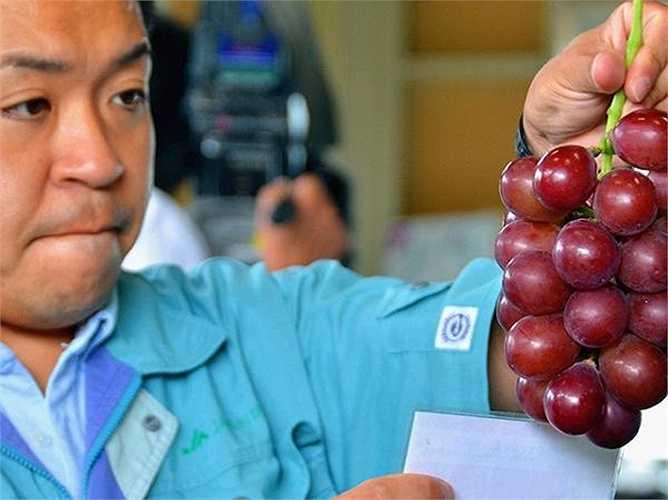 Cuộc đấu giá được diễn ra tại Kanazawa cách Tokyo 300km. Nhật Bản nổi tiếng với nhiều loại trái cây được mua với giá cao như dưa hấu, xoài