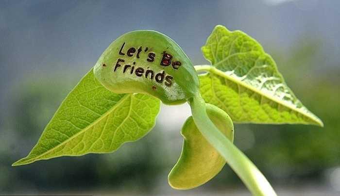 Sở dĩ những hạt đậu này được gọi là hạt đậu thần kỳ vì trên mỗi hạt giống có các dòng chữ nhiều thông điệp như 'Tình bạn', 'tình yêu' hay lời nhắn nhủ 'I Love you'... khi hạt nảy mầm thành cây khá đẹp mắt và độc đáo.