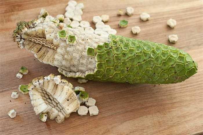 Monstera deliciosa là một loài thực vật có hoa trong họ Ráy, chúng sinh trưởng nhiều ở các vùng Trung Mỹ. Ở nhiều quốc gia thuộc các vùng này, trái cây này có giá trị kinh tế tốt.