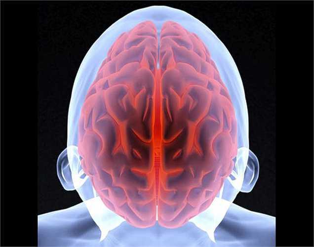Một nghiên cứu gần đây được tiến hành trên chuột đã chứng minh rằng tập thể dục giúp kích thích sự tăng trưởng của các tế bào trong các mô não.