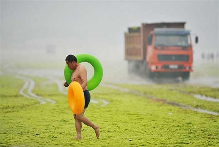 Một người đàn ông vác phao đi trên bờ biển phủ lớp tảo dày ở Thanh Đảo hôm 6/7. Ảnh: Reuters
