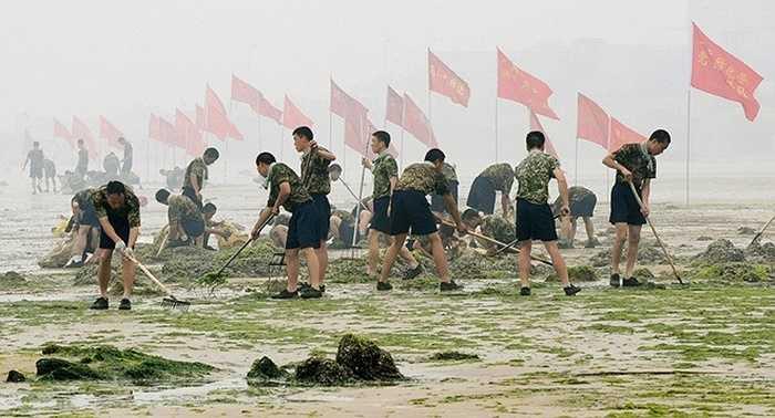 Hơn 11.000 người gồm các tình nguyện viên và binh lính cùng ra quân làm sạch bờ biển. Bức hình ghi lại cảnh làm vệ sinh bãi biển của các binh lính Quân Giải phóng Nhân dân Trung Quốc gần Trung tâm Đua Thuyền tại Thanh Đảo hôm 5/7/2008. Ảnh: AFP