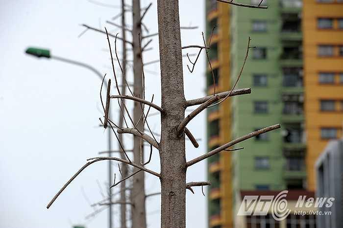 Những cành cây khô héo, không mọc nổi dù chỉ một chiếc lá.