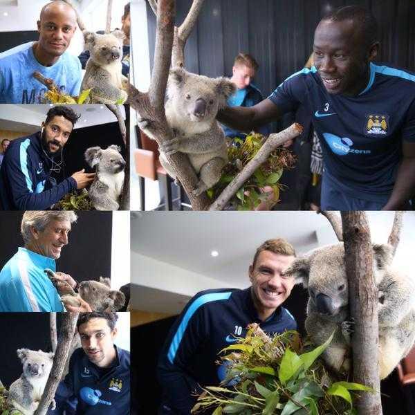 Cầu thủ Man City chụp hình với chú Kaola đáng yêu tại Úc