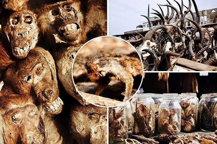 Đất nước nhỏ bé Togo, vùng đất phía tây Châu Phi, bao đời nay vẫn duy trì tập tục hiến tế động vật cho các vị thần trong các buổi lễ.