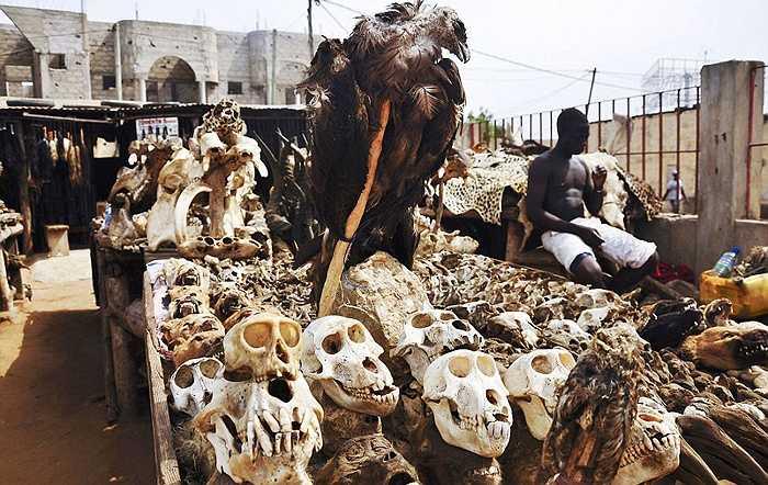 Giá của các loài thú quý như hổ, báo, cá sấu, sư tử... sẽ bán được giá cao vì những con thú này là biểu tượng của sức mạnh, trí tuệ và tâm hồn.