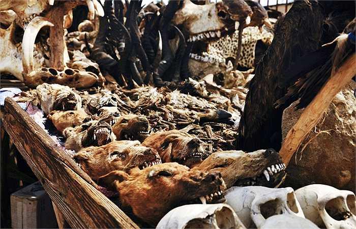 Chính quyền sở tại đã ngăn chặn, siết chặt tình trạng săn bắn, giết hại thú làm bùa ngải, tuy nhiên tình hình vẫn chưa được cải thiện. Nhiều động vật có nguy cơ tuyệt chủng vì nạn săn bắt thú quý làm bùa ngải.