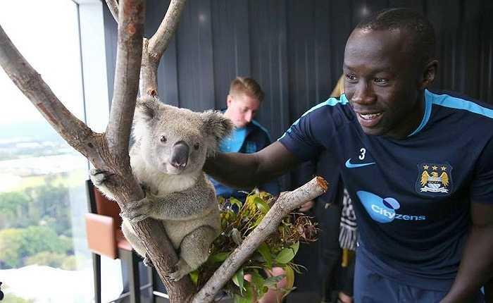 Các cầu thủ chụp ảnh cùng Kaolas, con vật đặc trưng tại Úc