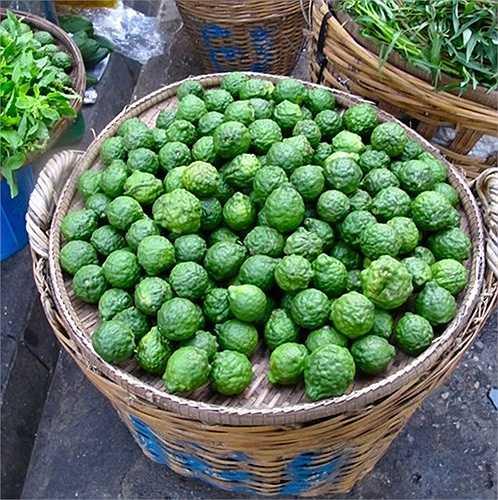 Cho năng suất quả từ 20-30kg/cây, chanh Thái giúp nhà vườn thu hoạch được tiền triệu mỗi cây, mỗi vụ.