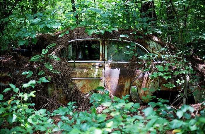 Cây cối bao phủ thân xe cũ