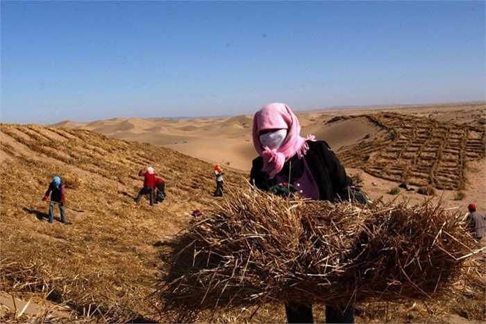 Thị trấn Minqin, Trung Quốc. Từng là một thị trấn rất phát triển về nông nghiệp ở Trung Quốc. Tuy nhiên, hiện nay do hồ chứa nước đã biến mất nên nguồn cấp bị cắt và khiến cho người dân không thể canh tác. Bão cát sa mạc dần dần phủ kín nơi đây và thị trấn này được dự báo là sẽ biến mất hoàn toàn trong tương lai không xa