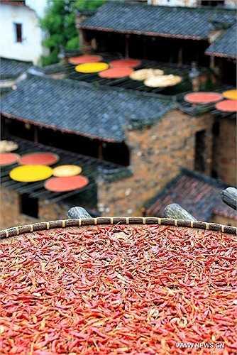 Ớt là gia vị được sử dụng rất phổ biến trong ẩm thực Trung Quốc