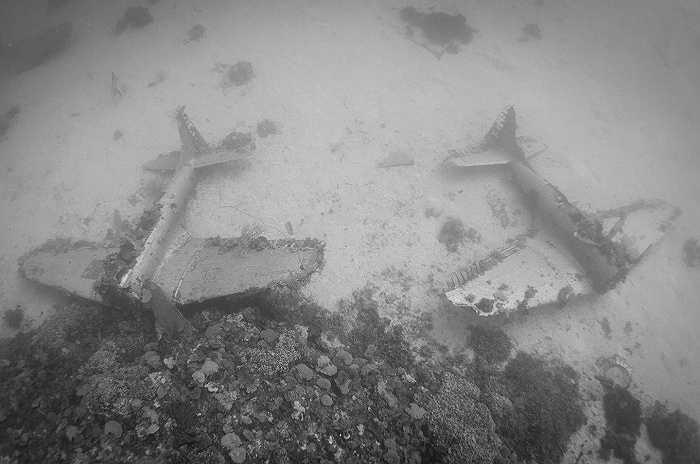 Thợ lặn Brandi Mueller, người thích khám phá đáy đại dương, đã ghi lại những bức ảnh hiếm này