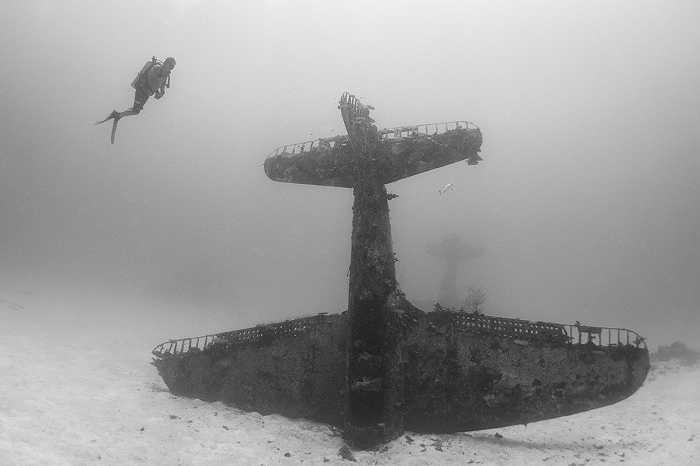 Và chúng còn trở thành nơi ẩn nấp cho nhiều loài sinh vật dưới biển