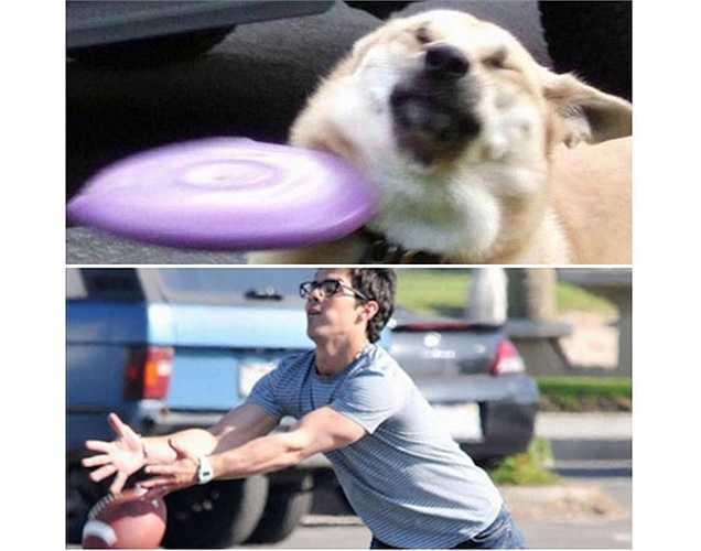 Trong khi đó, ông anh Joe Jonas thể hiện tình yêu thể thao với trò ném đĩa cùng chú cún cưng.  (Bài: Vũ Khanh, Nguồn: tổng hợp)
