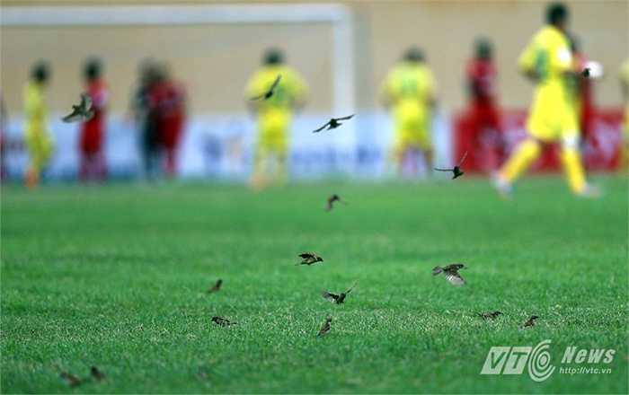 Trận đấu khép lại với hình ảnh đàn chim sẻ nháo nhác bay xuống sân, khiến người ta liên tưởng tới cảnh thua 'tan tác chim muông' của đội bóng xứ Thanh. (Hà Thành - Ảnh: Quang Minh)