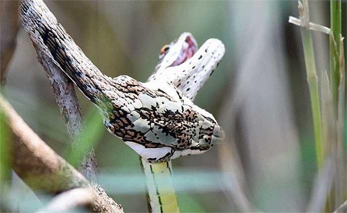 Những hình ảnh cận cảnh này được ghi lại ở công viên săn bắn Sabi Sands, Nam Phi