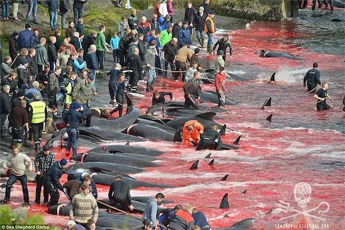 Lễ hội này được cho là một trong những phong tục đẫm máu trên thế giới