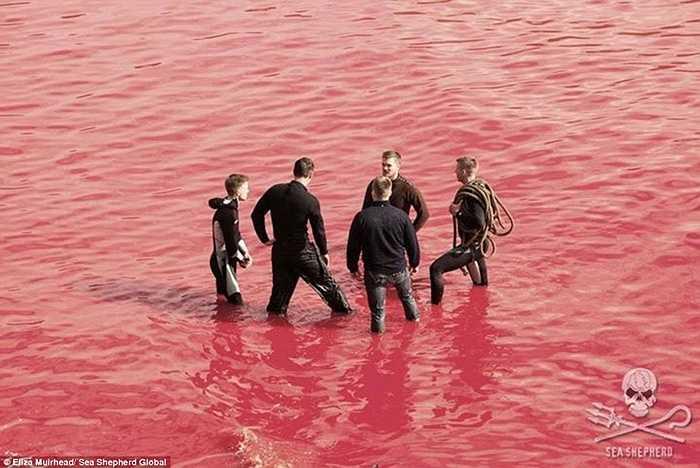 Máu đỏ cả nước biển quanh những người thợ săn của đảo